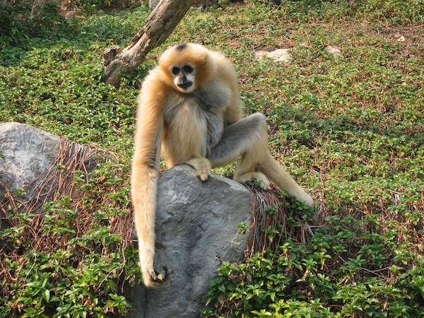 зоопарк Чанг Май