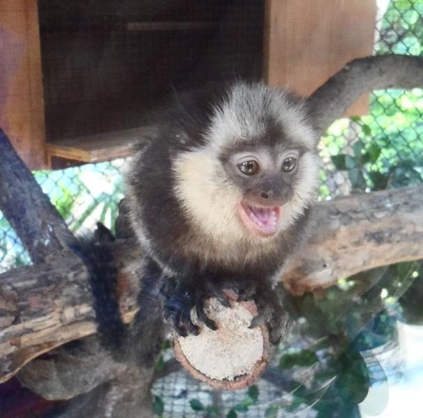 зоопарк Чанг Май Таиланд