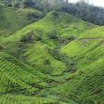 Камерон-Хайлендс петушествие по высокогорью Малайзии.