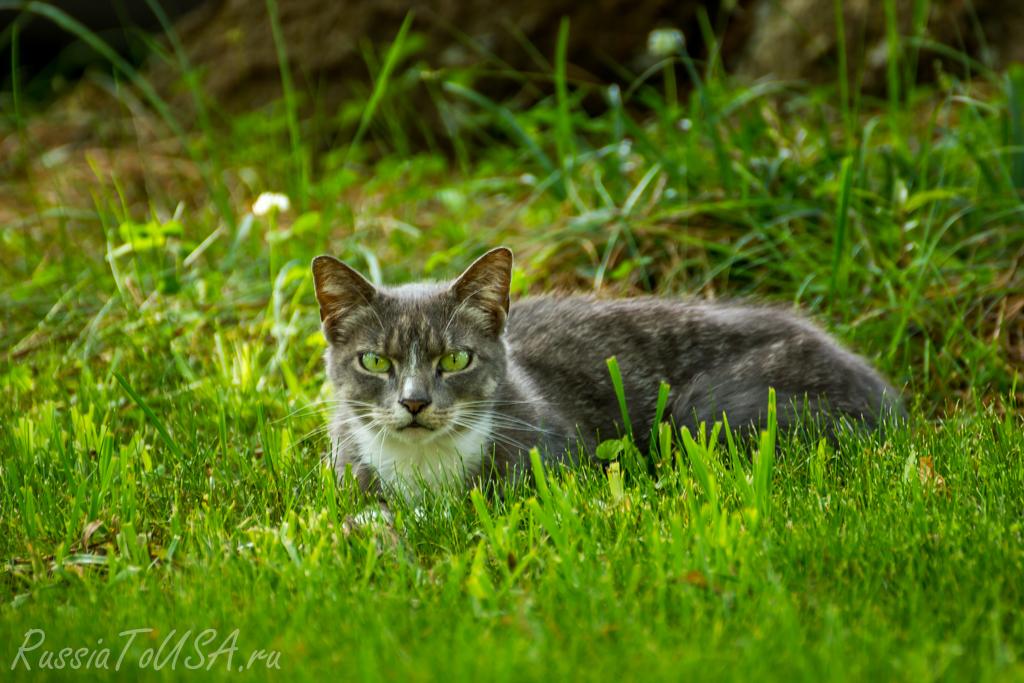 красивое фото кошка