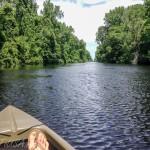 Парки Северной Каролины – Dismal Swamp State Park
