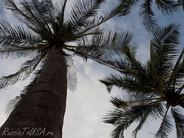 Пальмы Таиланд