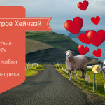 Остров Хеймаэй Исландия / Овцы преследуют туристов